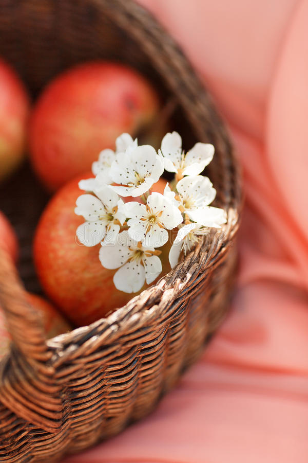 Κόκκινα μήλα στο καλάθι στο ρόδινο υπόβαθρο υποβάθρου στοκ εικόνα