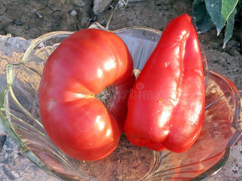 Κόκκινα ντομάτα και κουδούνι -κουδούνι-peper του Ουζμπεκιστάν Mayskiy στοκ εικόνες με δικαίωμα ελεύθερης χρήσης