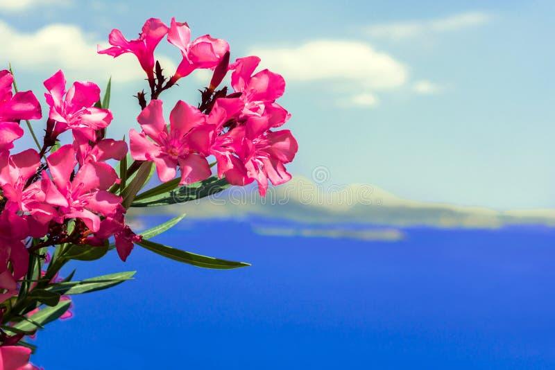 Κόκκινα λουλούδια, θάλασσα, ουρανός, νησί, Ελλάδα, Αθήνα, προκυμαία, μεγάλη άποψη στοκ φωτογραφίες