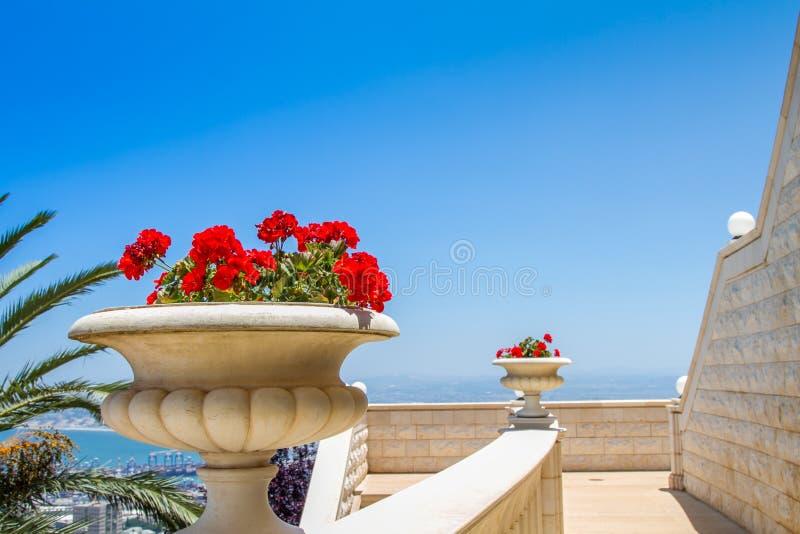 Κόκκινα λουλούδια στο βάζο πετρών στοκ εικόνα