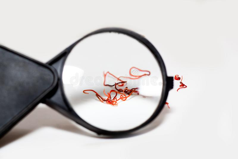 Κόκκινα σκουλήκια παρασίτων σε ένα άσπρο υπόβαθρο στοκ φωτογραφία με δικαίωμα ελεύθερης χρήσης