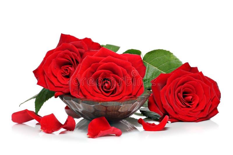 Κόκκινα τριαντάφυλλα και πέταλα στοκ φωτογραφίες