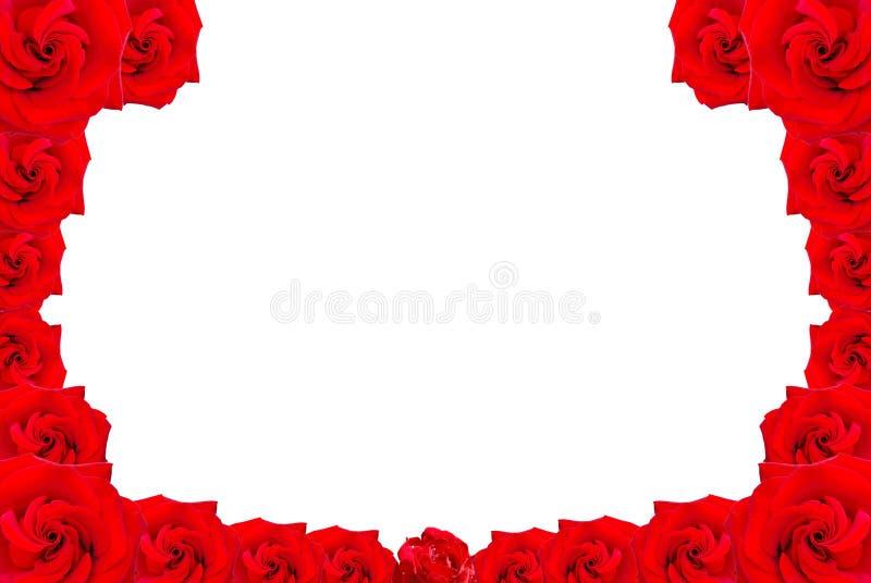 κόκκινα τριαντάφυλλα πλα στοκ εικόνες με δικαίωμα ελεύθερης χρήσης
