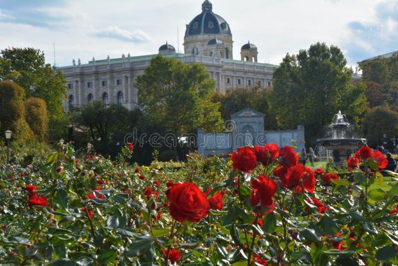 Κόκκινα τριαντάφυλλα στο πρώτα σχέδιο και το μουσείο των Καλών Τεχνών στο υπόβαθρο στη Βιέννη στοκ φωτογραφίες