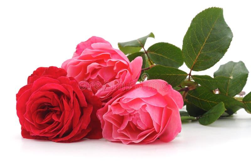 κόκκινα τριαντάφυλλα τρία στοκ εικόνα