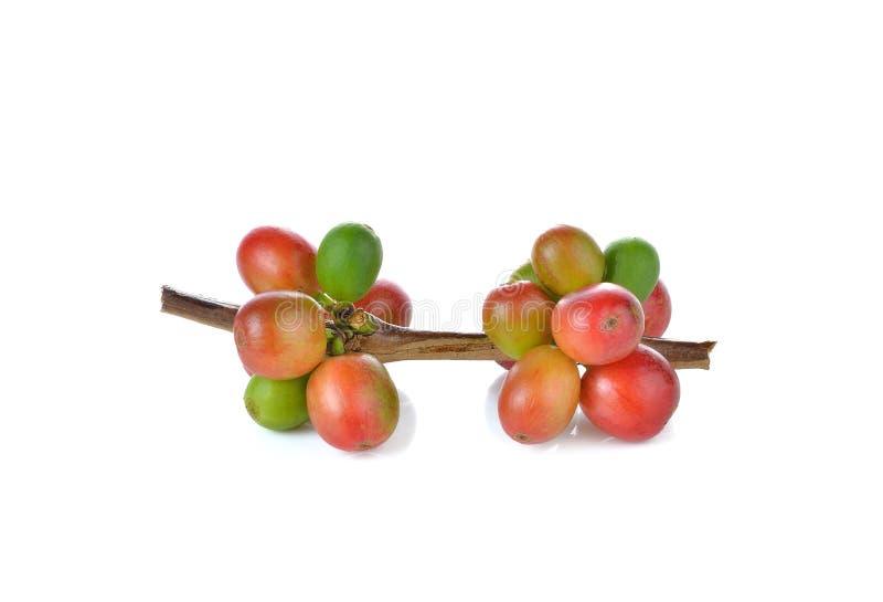 Κόκκινα φασόλια καφέ, ώριμα μούρα που απομονώνονται στο άσπρο υπόβαθρο στοκ εικόνα