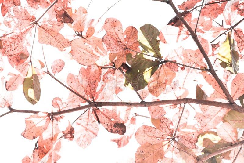 Κόκκινα φύλλα για την εικόνα υποβάθρου στοκ φωτογραφία με δικαίωμα ελεύθερης χρήσης