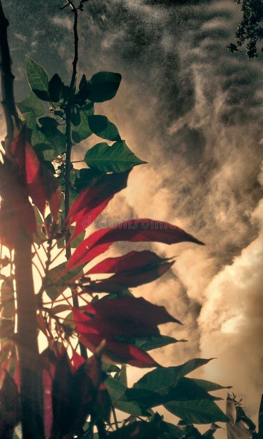 Κόκκινα φύλλα εποχών στοκ εικόνα