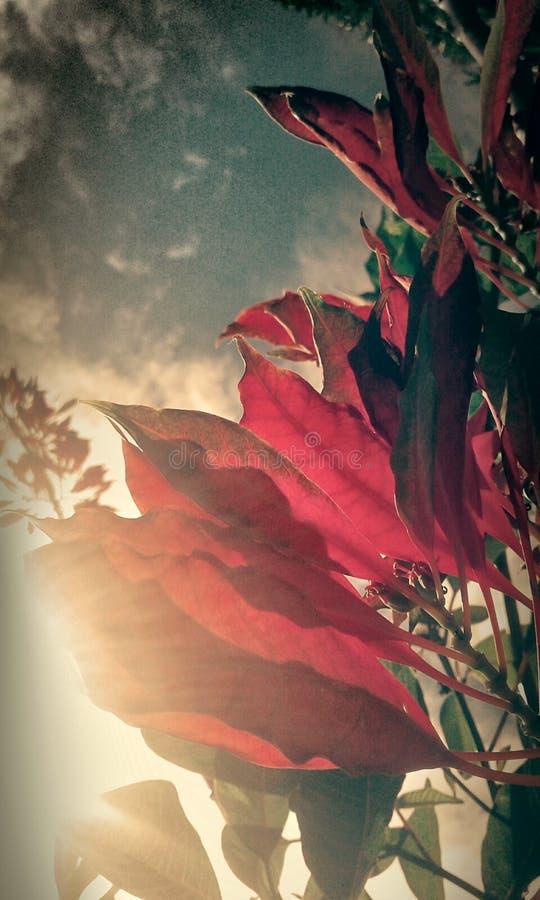 Κόκκινα φύλλα εποχών στοκ φωτογραφία με δικαίωμα ελεύθερης χρήσης