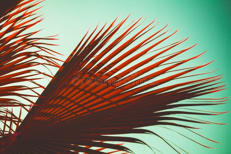 Κόκκινα φύλλα φοινίκων πέρα από το γαλαζοπράσινο ουρανό, τυποποιημένη φωτογραφία στοκ εικόνες