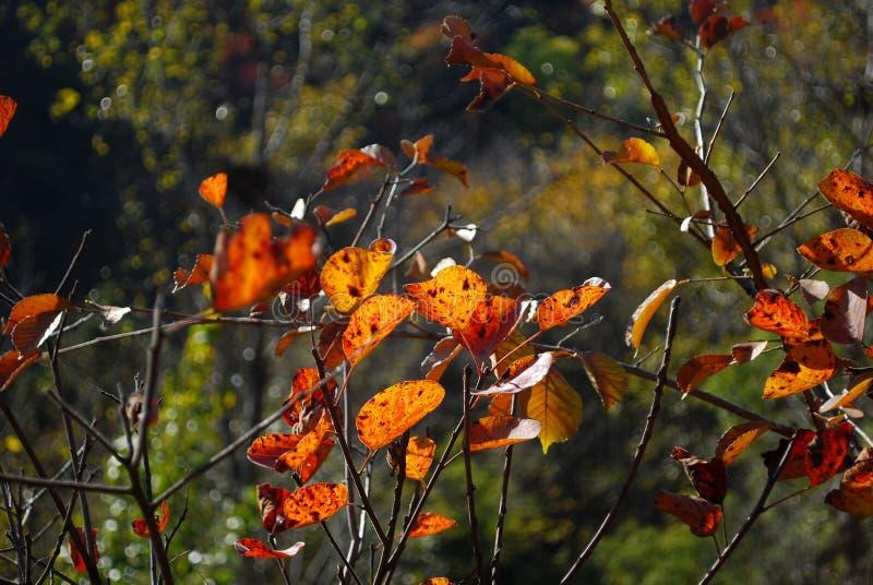 Κόκκινα φύλλα όπως την πεταλούδα στοκ εικόνες