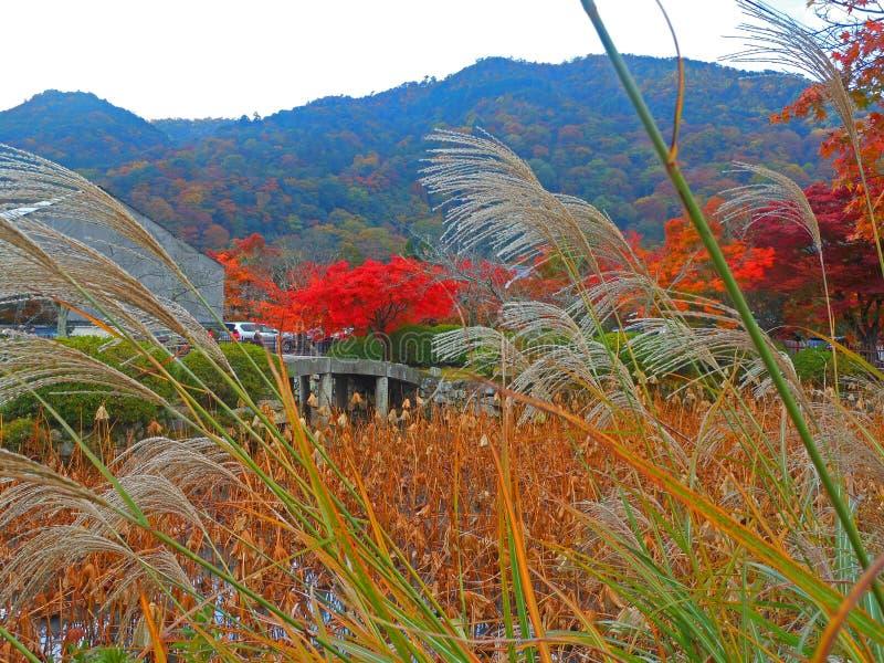 Download Κόκκινα φύλλα στο Κιότο στοκ εικόνες. εικόνα από φύλλα - 62713580