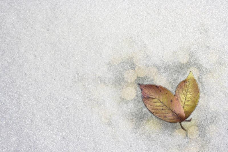 Κόκκινα φύλλα στο χιόνι στοκ εικόνες με δικαίωμα ελεύθερης χρήσης