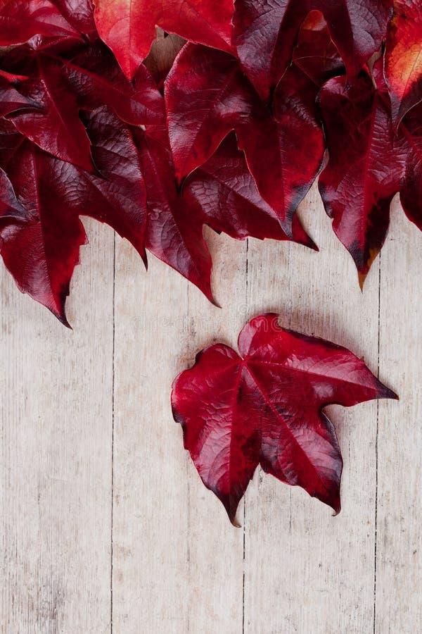 Κόκκινα φύλλα φθινοπώρου στοκ φωτογραφία