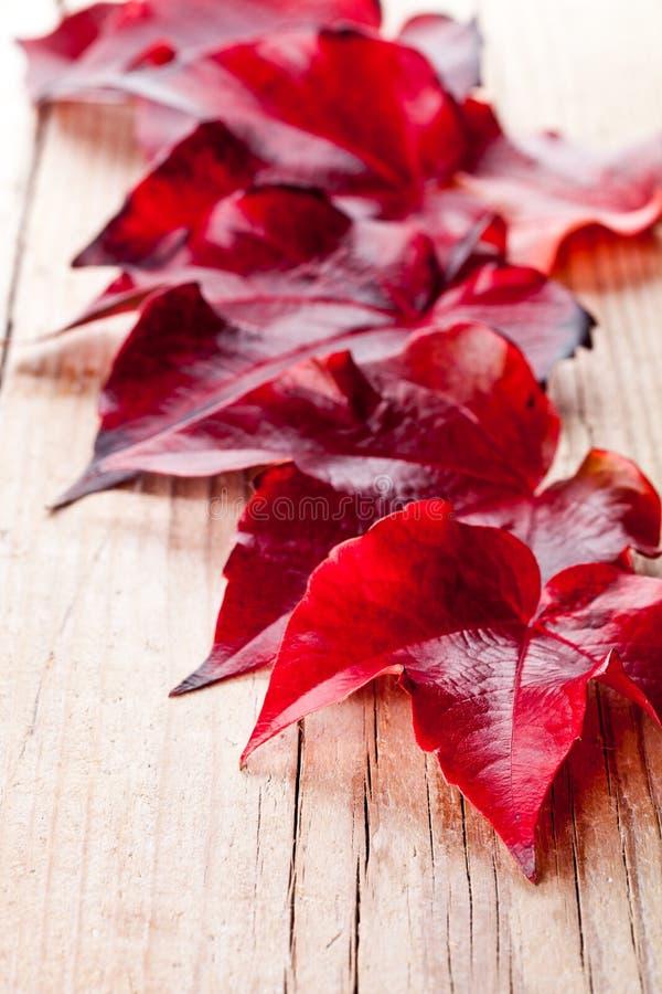 Κόκκινα φύλλα φθινοπώρου στοκ φωτογραφίες με δικαίωμα ελεύθερης χρήσης