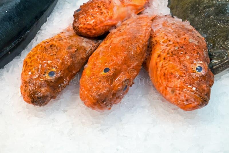 Κόκκινα ψάρια στον πάγο στην αγορά Boqueria στοκ εικόνες
