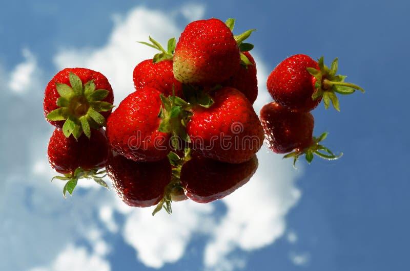 Κόκκινα ώριμα μούρα φραουλών που σχεδιάζονται οριζόντια σε μια σειρά σε έναν καθρέφτη με την αντανάκλαση του ουρανού και των σύνν στοκ εικόνες