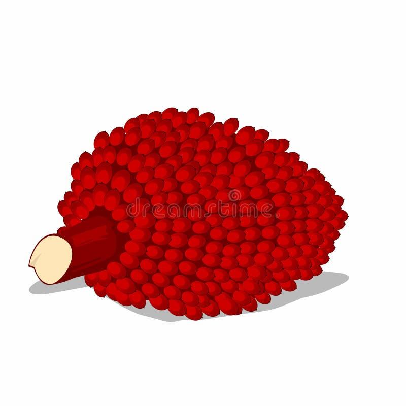 Κόκκινα ώριμα φρούτα φοινικών στην επίπεδη απεικόνιση ύφους απεικόνιση αποθεμάτων