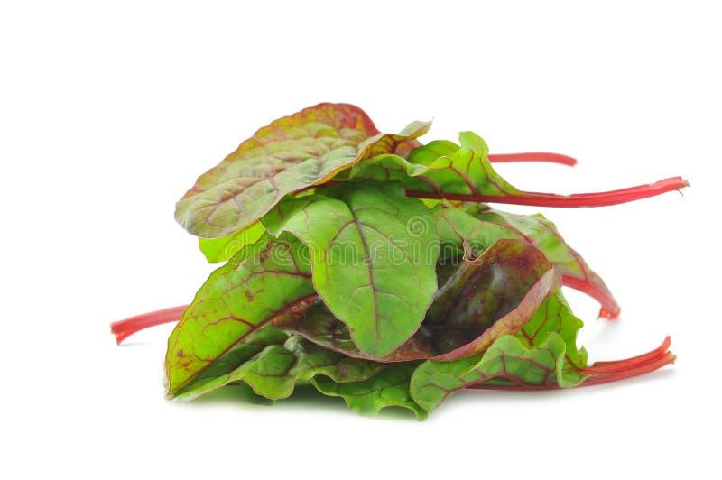 Κόκκινα Chard φύλλα σαλάτας στοκ φωτογραφίες