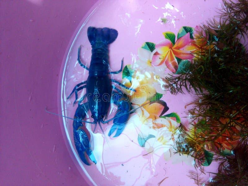 Κόκκινα craw νυχιών ψάρια στοκ φωτογραφίες