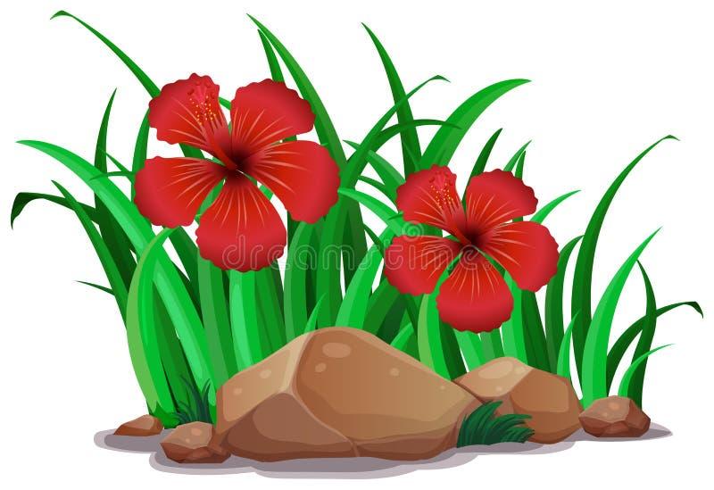 Κόκκινα hibiscus στο θάμνο διανυσματική απεικόνιση