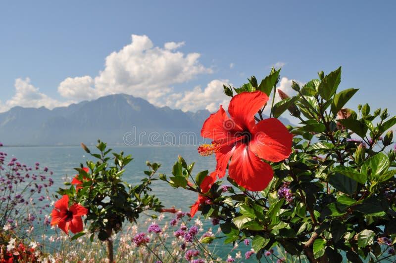 Κόκκινες βουνά και λίμνη ibiscus behond στοκ φωτογραφία