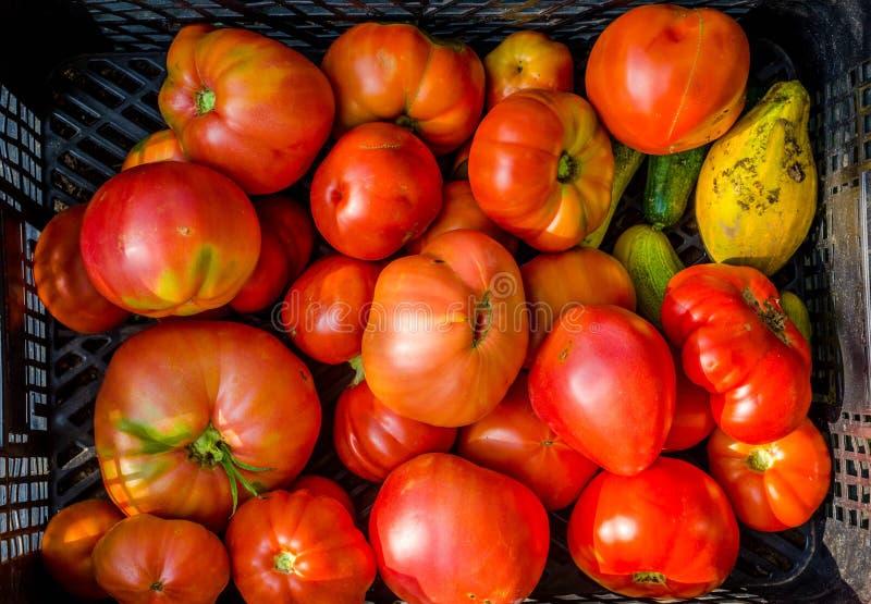 κόκκινες ντομάτες οικογενειακών κειμηλίων χρωμάτων κίτρινες στοκ εικόνα