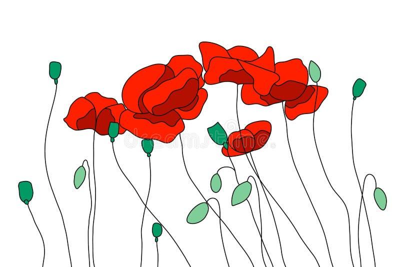 Κόκκινες παπαρούνες τομέων, ανθίζοντας παπαρούνες Οφθαλμοί, μίσχοι και σπόροι διανυσματική απεικόνιση