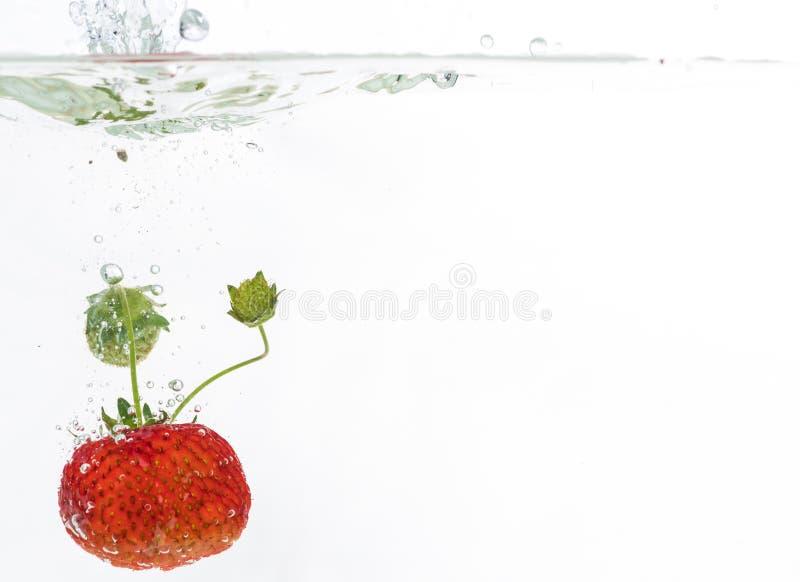 Κόκκινες φρέσκες φράουλες που ρίχνονται στο νερό, κάτω από το νερό Γκέτα και παφλασμός στοκ εικόνες με δικαίωμα ελεύθερης χρήσης