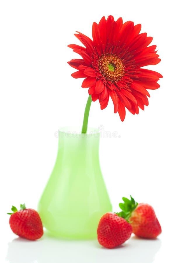 Κόκκινες gerbera και φράουλες στοκ φωτογραφία