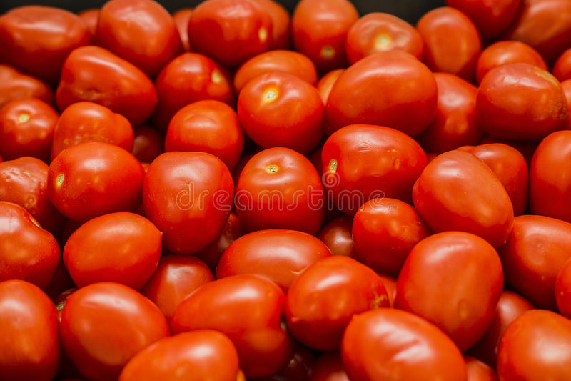 Κόκκινες juicy ντομάτες στοκ φωτογραφία