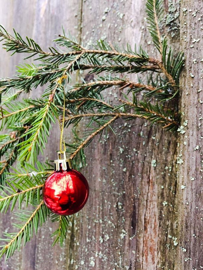 Κόκκινη ένωση σφαιρών Χριστουγέννων σε έναν κομψό κλάδο στοκ φωτογραφία