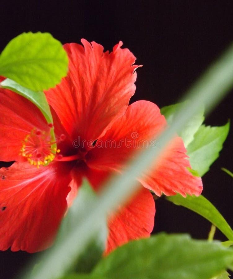 Κόκκινη αγάπη λουλουδιών για τη φύση στοκ φωτογραφία με δικαίωμα ελεύθερης χρήσης