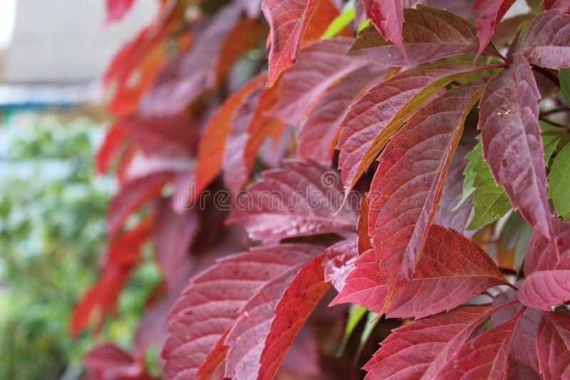 κόκκινη βλάστηση στοκ εικόνες