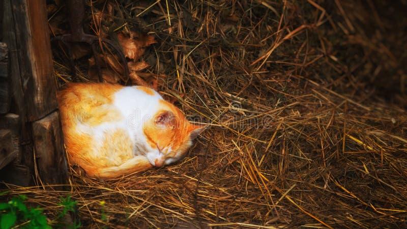 Κόκκινη γάτα που κοιμάται στο σανό στοκ φωτογραφία με δικαίωμα ελεύθερης χρήσης