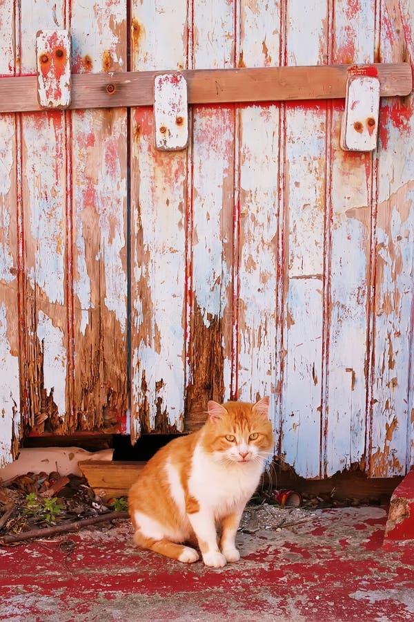 κόκκινη γάτα στο υπόβαθρο του παλαιού φράκτη στοκ φωτογραφία με δικαίωμα ελεύθερης χρήσης