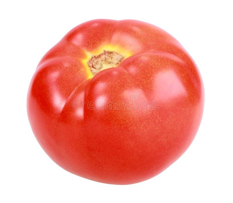 κόκκινη ενιαία ντομάτα στοκ εικόνες