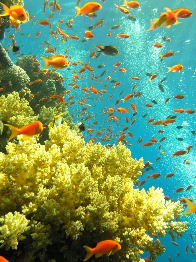 κόκκινη θάλασσα σκοπέλων στοκ εικόνα