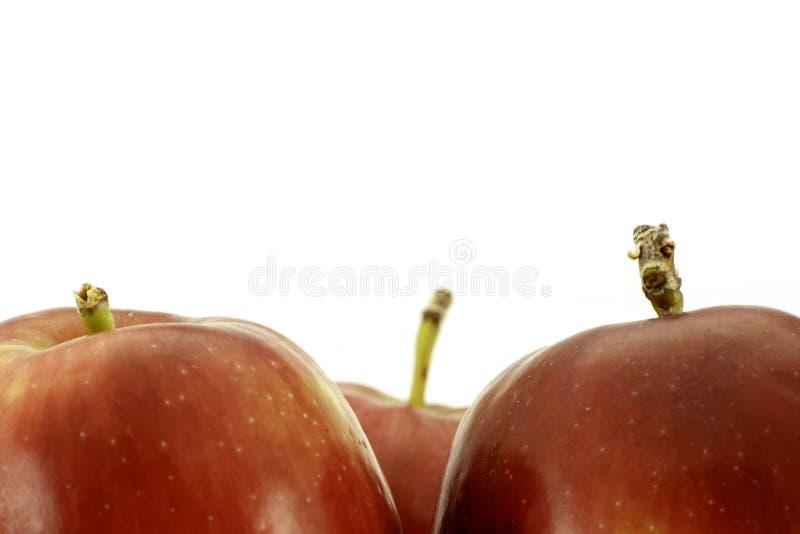 Κόκκινη κινηματογράφηση σε πρώτο πλάνο μήλων που βλασταίνεται στο λευκό με το διάστημα αντιγράφων για το κείμενο στοκ εικόνες