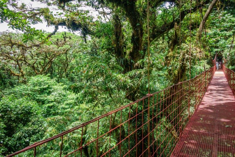 Κόκκινη κρεμώντας γέφυρα στο τροπικό δάσος Monteverde στοκ εικόνες με δικαίωμα ελεύθερης χρήσης