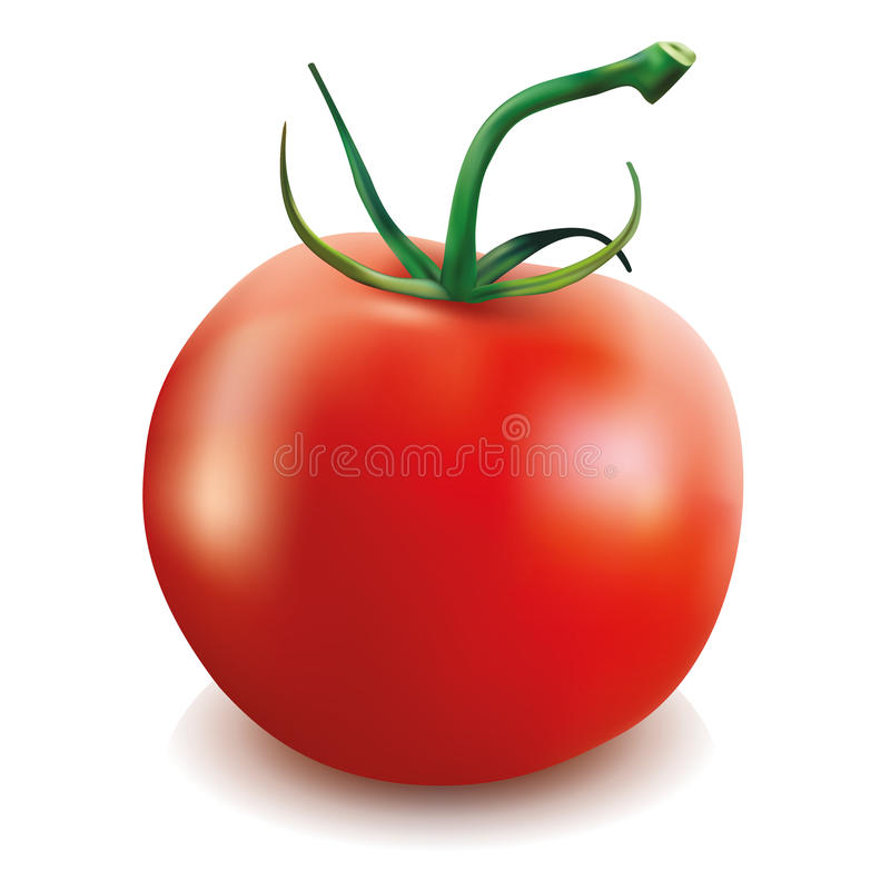 Κόκκινη ντομάτα διανυσματική απεικόνιση
