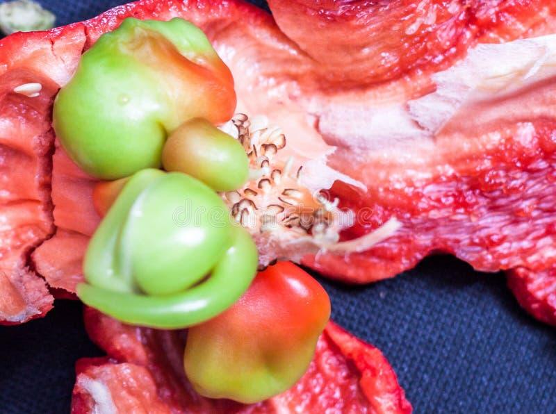 Κόκκινη πάπρικα στην εστίαση με τους σπόρους στοκ φωτογραφίες με δικαίωμα ελεύθερης χρήσης