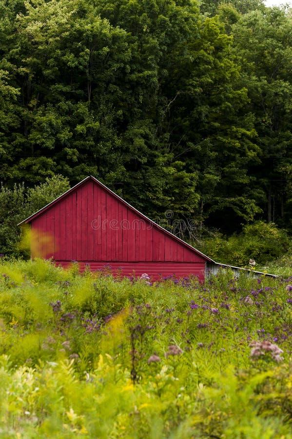 Κόκκινη σιταποθήκη στους θερινούς τομείς - δυτικά βουνά της Μέρυλαντ στοκ φωτογραφία με δικαίωμα ελεύθερης χρήσης