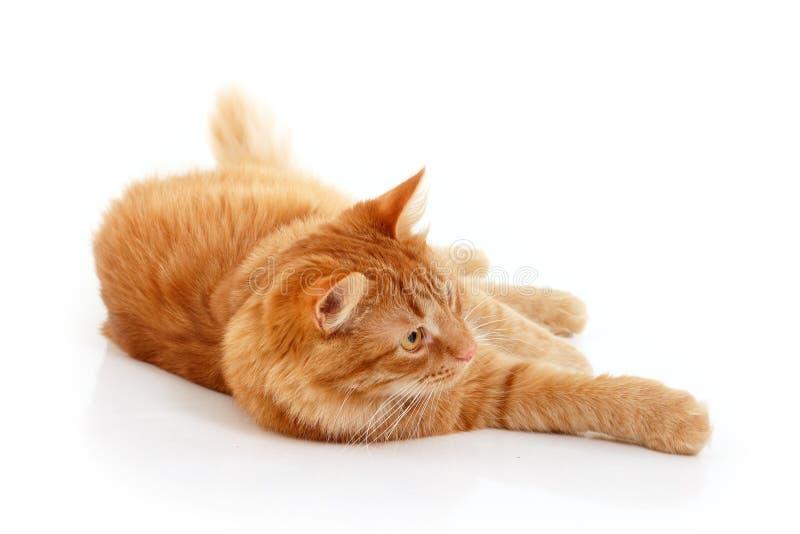 Κόκκινη στήριξη γατών στοκ εικόνα με δικαίωμα ελεύθερης χρήσης