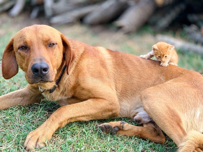 Κόκκινη συνεδρίαση γατακιών σε ένα κόκκινο σκυλί στο ναυπηγείο στο χορτοτάπητα στοκ εικόνες με δικαίωμα ελεύθερης χρήσης