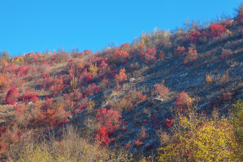 Κόκκινη φύση φθινοπώρου στοκ φωτογραφία