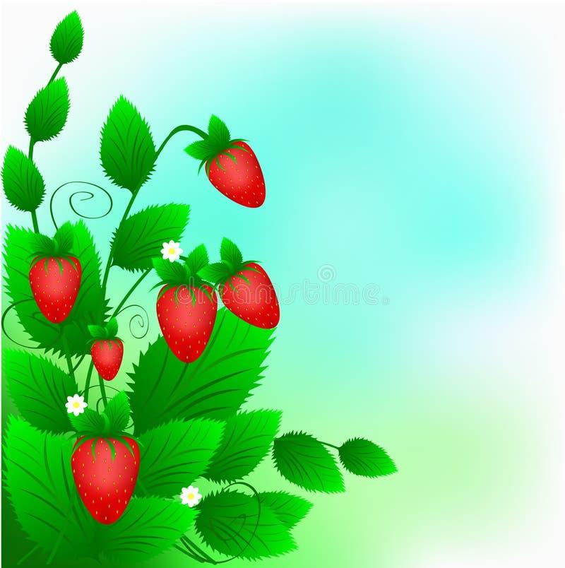 κόκκινη ώριμη φράουλα θάμνων απεικόνιση αποθεμάτων