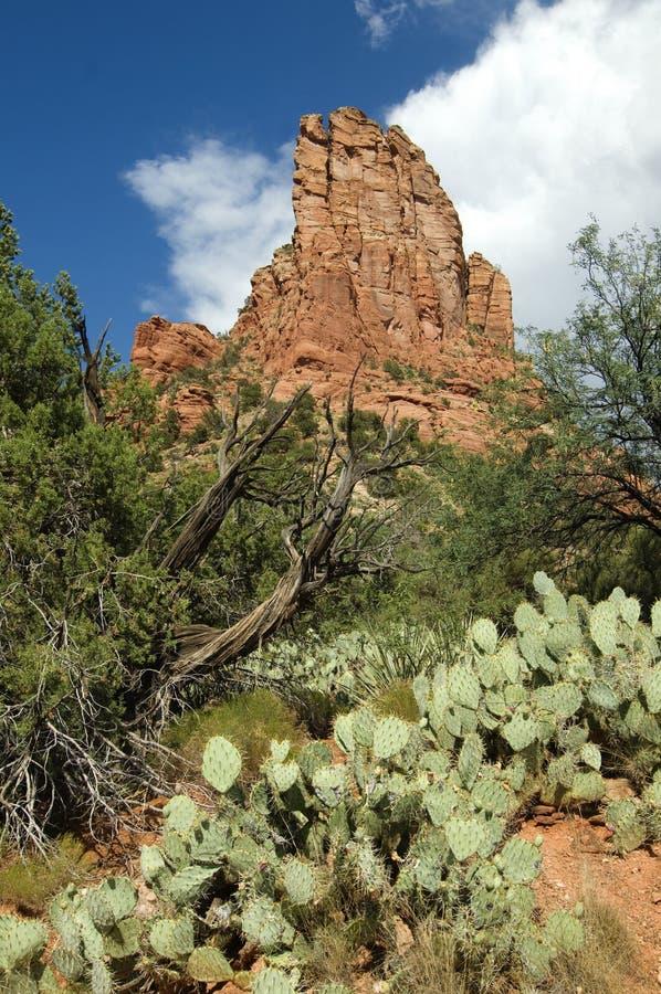 κόκκινοι βράχοι ερήμων της στοκ εικόνα