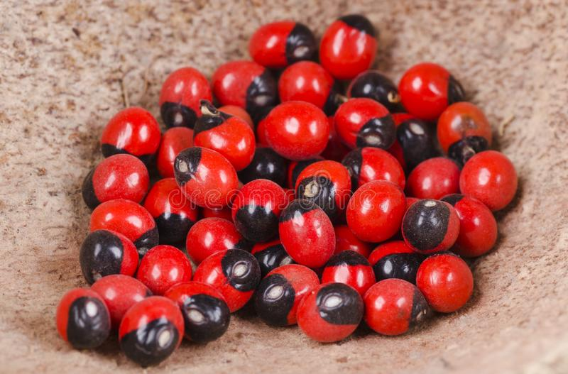 Κόκκινοι και μαύροι σπόροι στοκ φωτογραφία
