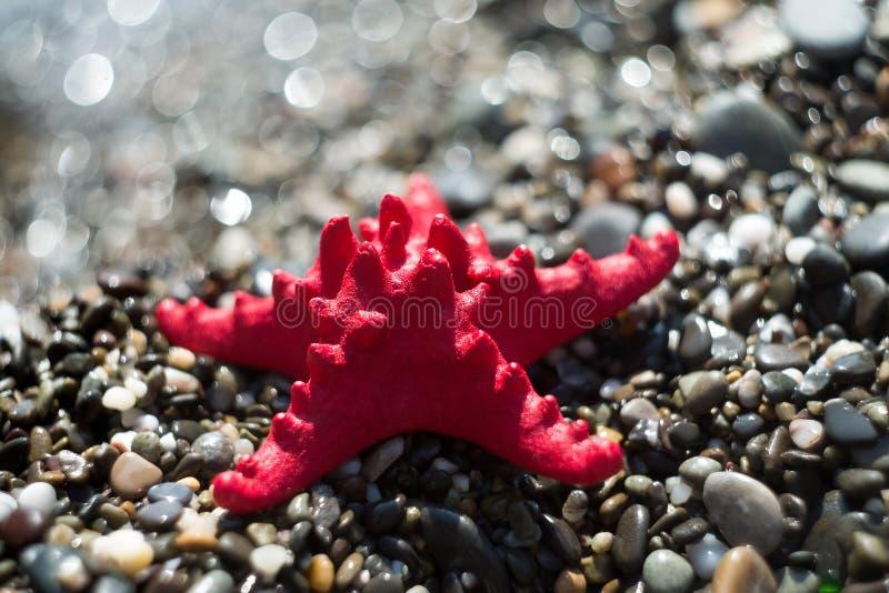 Κόκκινος αστερίας στο αμμοχάλικο, ακτή Θαλάσσια ζωή στοκ εικόνες